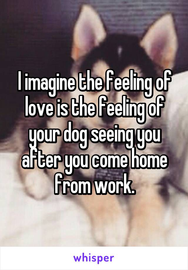 I imagine the feeling of love is the feeling of your dog seeing you after you come home from work.