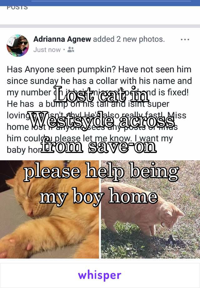 Lost cat in Westsyde across from save-on  please help being my boy home