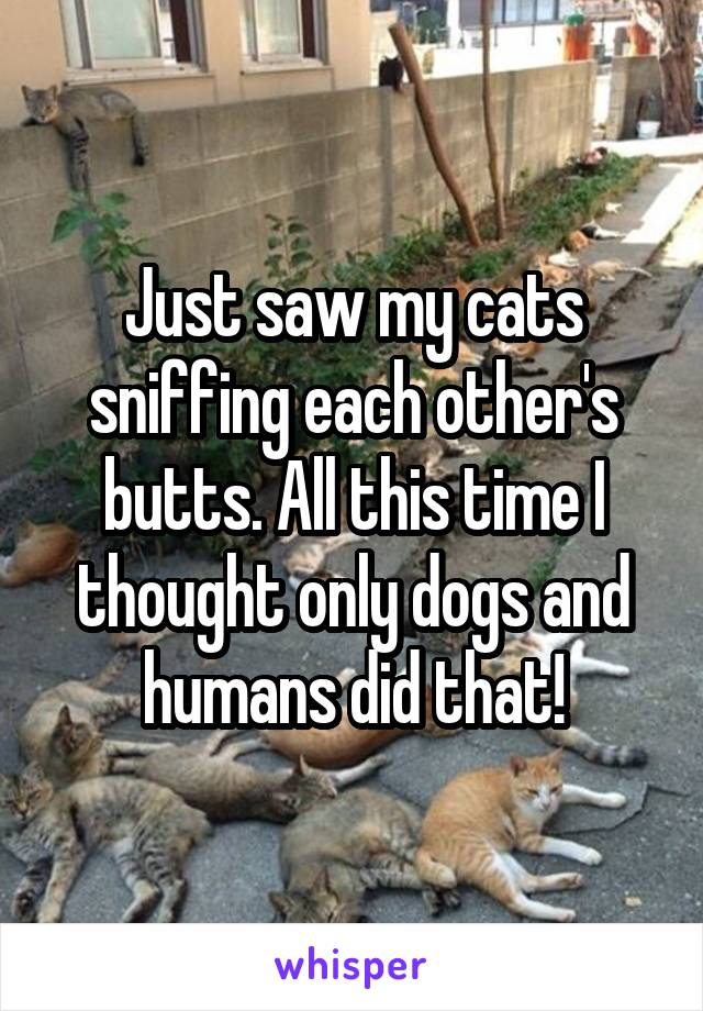 Just saw my cats sniffing each other's butts. All this time I thought only dogs and humans did that!