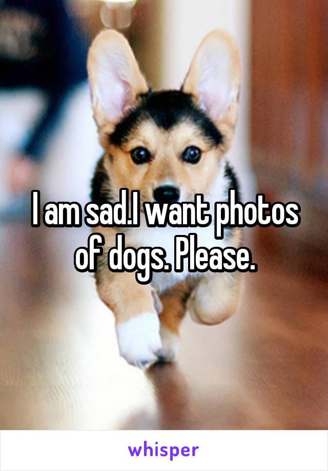 I am sad.I want photos of dogs. Please.