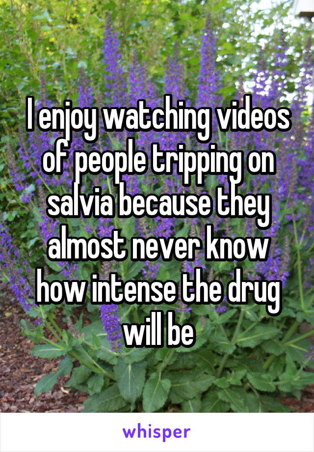 I enjoy watching videos of people tripping on salvia because they almost never know how intense the drug will be