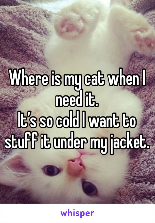 Where is my cat when I need it.  It's so cold I want to stuff it under my jacket.