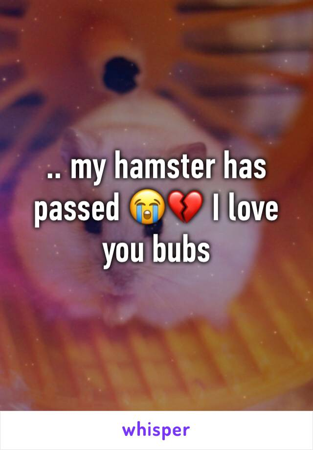 .. my hamster has passed 😭💔 I love you bubs