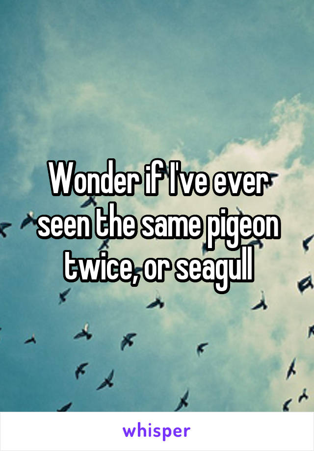 Wonder if I've ever seen the same pigeon twice, or seagull
