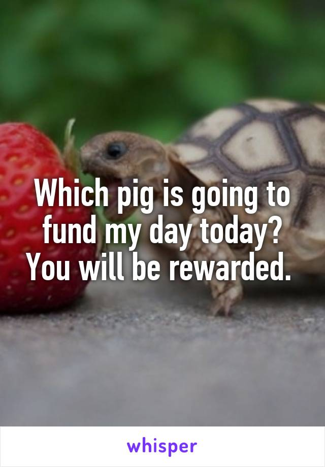 Which pig is going to fund my day today? You will be rewarded.