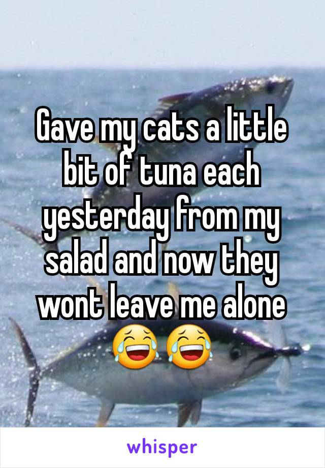 Gave my cats a little bit of tuna each yesterday from my salad and now they wont leave me alone 😂😂