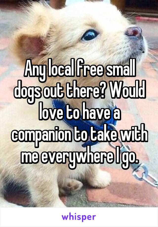 Any local free small dogs out there? Would love to have a companion to take with me everywhere I go.