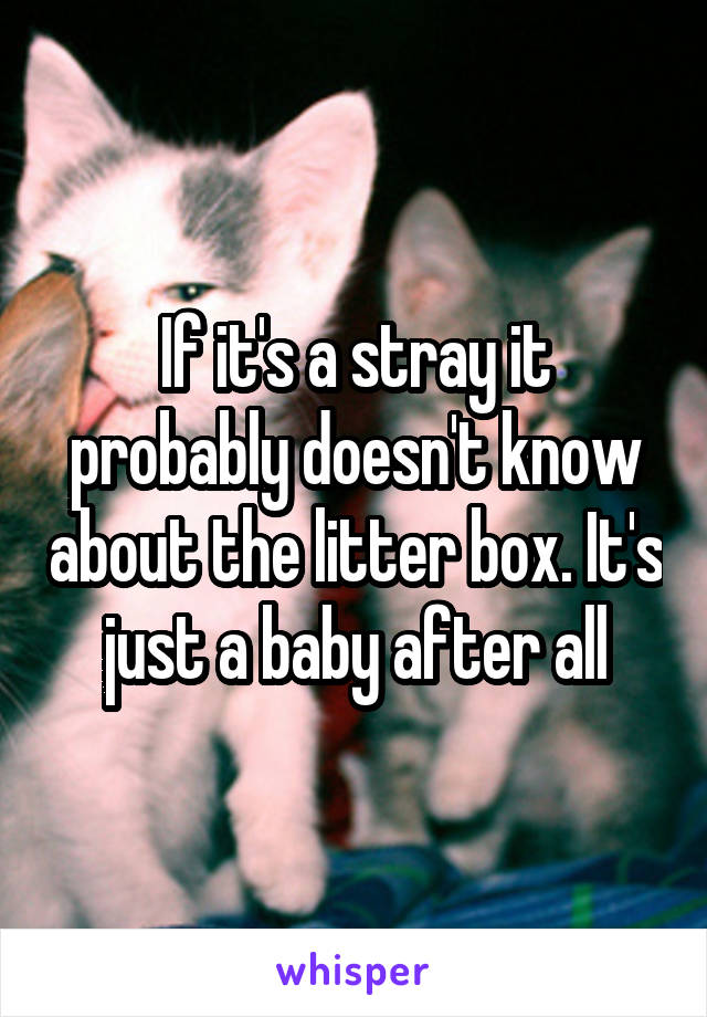 If it's a stray it probably doesn't know about the litter box. It's just a baby after all