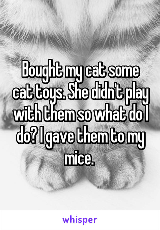 Bought my cat some cat toys. She didn't play with them so what do I do? I gave them to my mice.