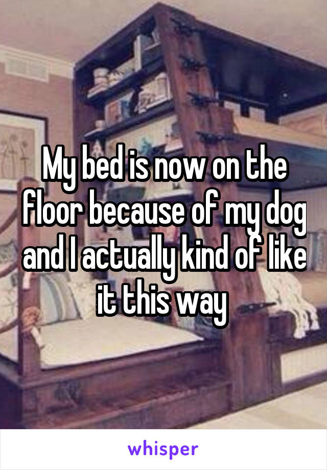 My bed is now on the floor because of my dog and I actually kind of like it this way