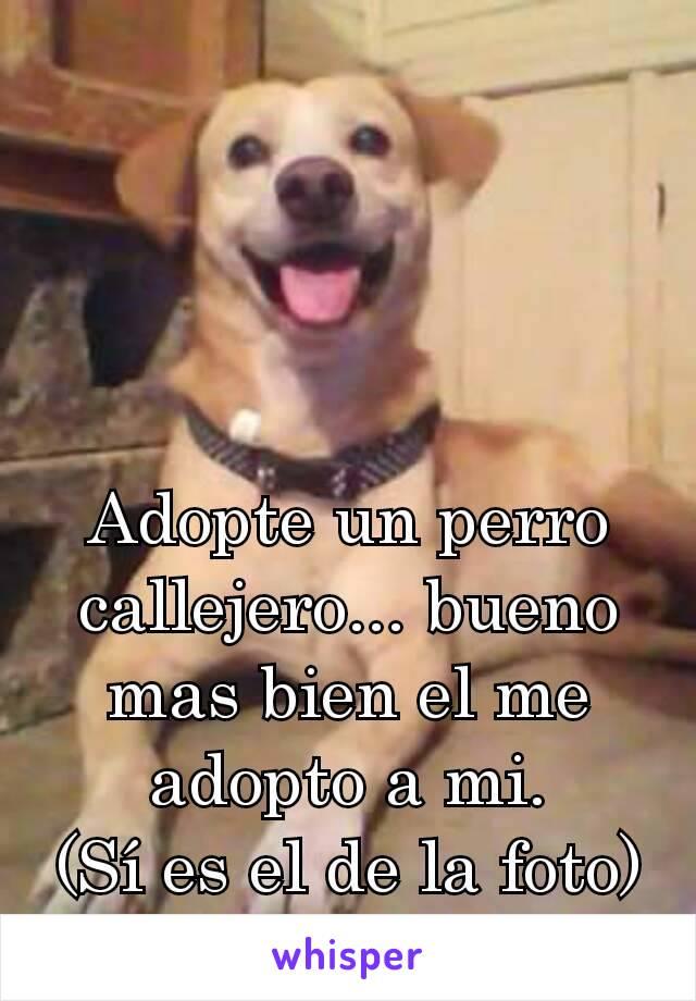 Adopte un perro callejero... bueno mas bien el me adopto a mi. (Sí es el de la foto)