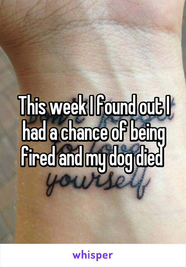 This week I found out I had a chance of being fired and my dog died