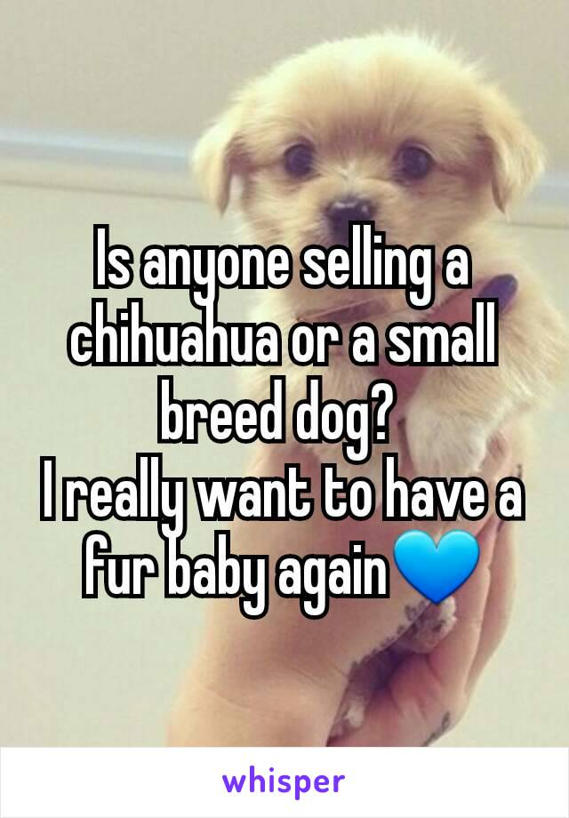 Is anyone selling a chihuahua or a small breed dog?  I really want to have a fur baby again💙