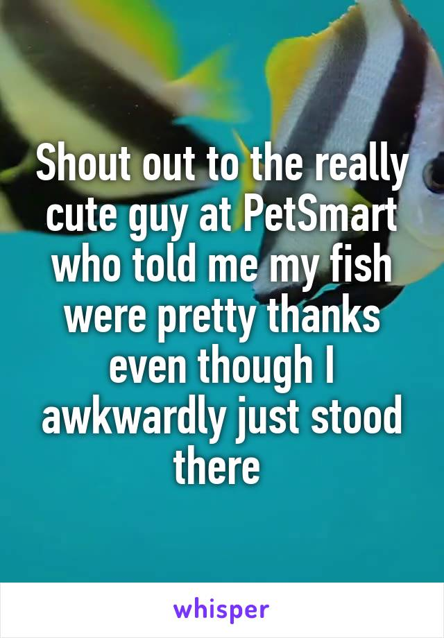 Shout out to the really cute guy at PetSmart who told me my fish were pretty thanks even though I awkwardly just stood there