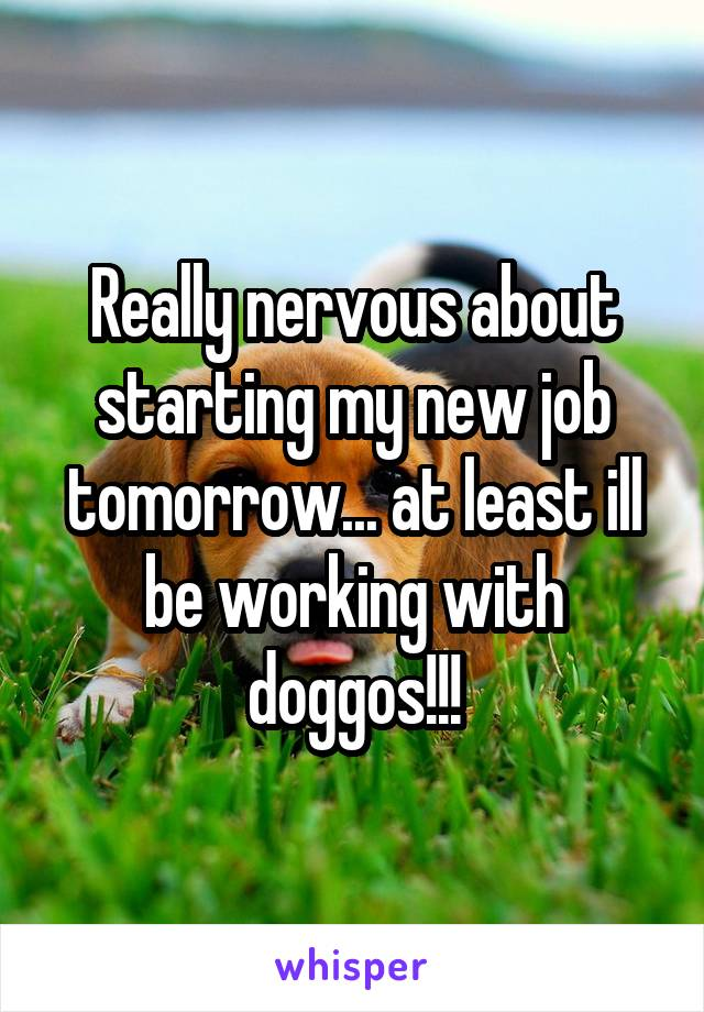 Really nervous about starting my new job tomorrow... at least ill be working with doggos!!!