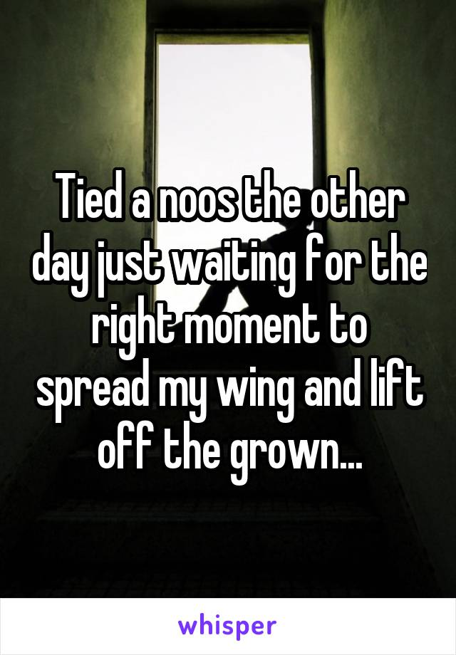 Tied a noos the other day just waiting for the right moment to spread my wing and lift off the grown...