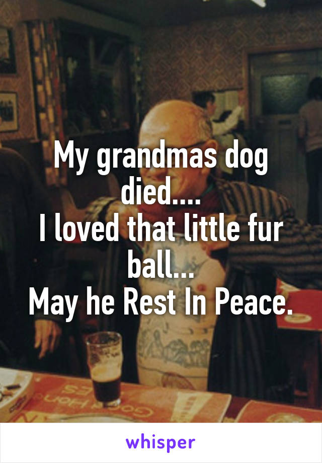 My grandmas dog died.... I loved that little fur ball... May he Rest In Peace.