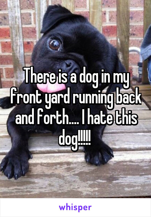 There is a dog in my front yard running back and forth.... I hate this dog!!!!!