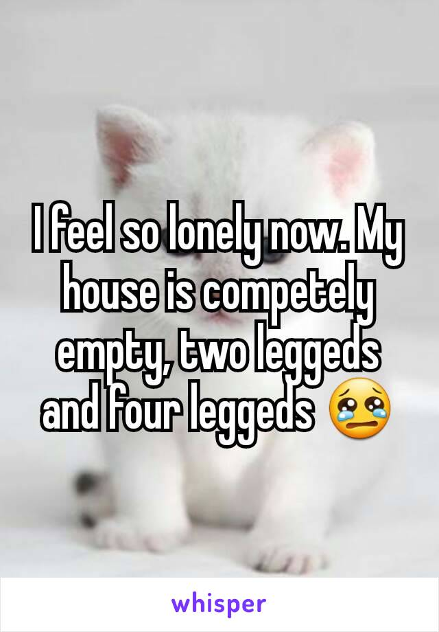 I feel so lonely now. My house is competely empty, two leggeds and four leggeds 😢