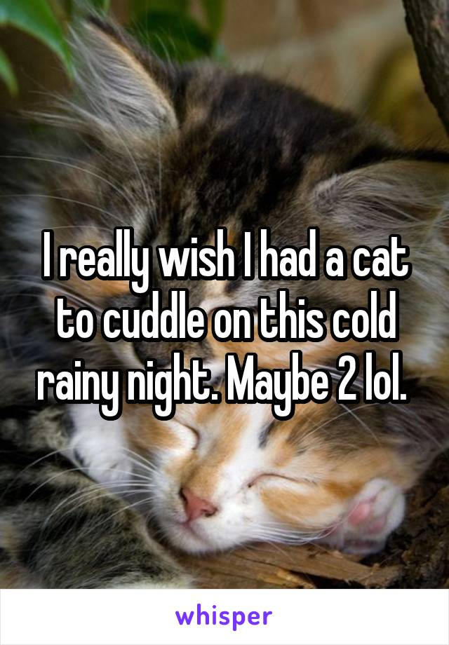 I really wish I had a cat to cuddle on this cold rainy night. Maybe 2 lol.