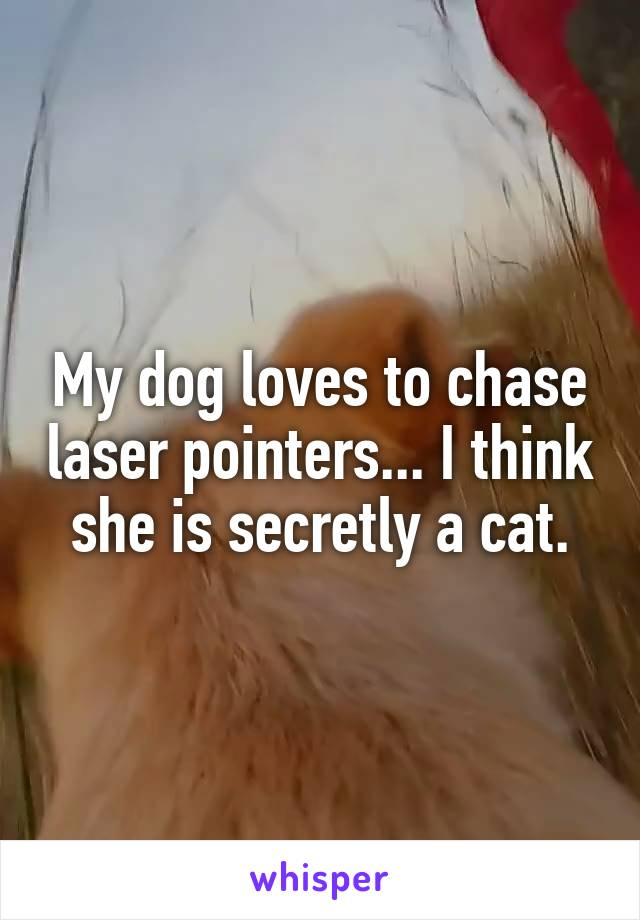 My dog loves to chase laser pointers... I think she is secretly a cat.