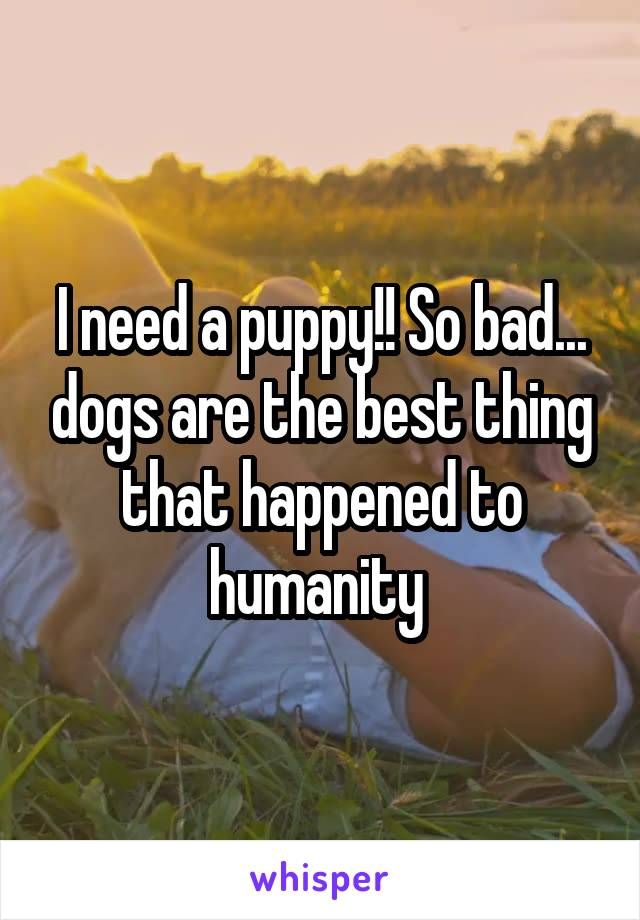 I need a puppy!! So bad... dogs are the best thing that happened to humanity