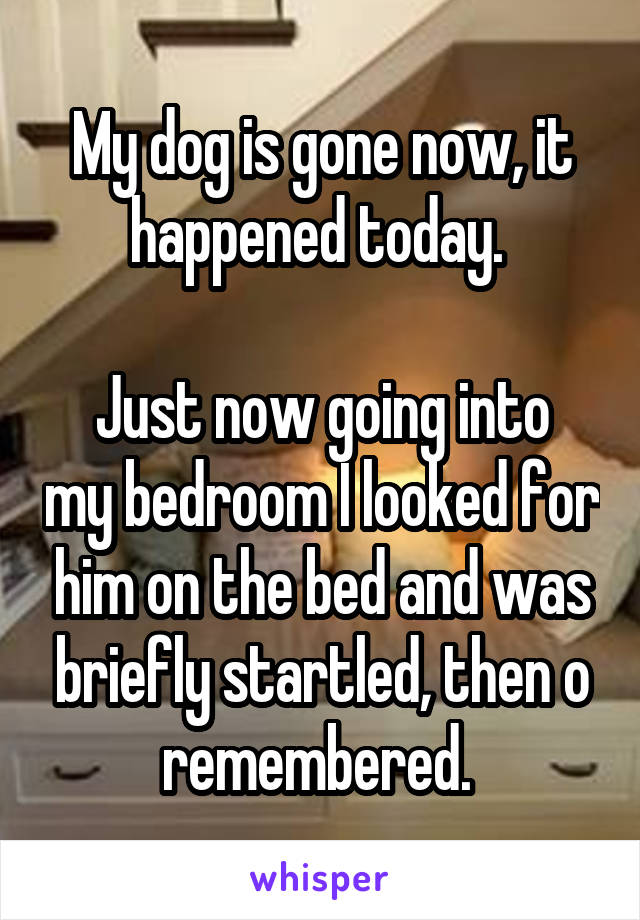 My dog is gone now, it happened today.   Just now going into my bedroom I looked for him on the bed and was briefly startled, then o remembered.