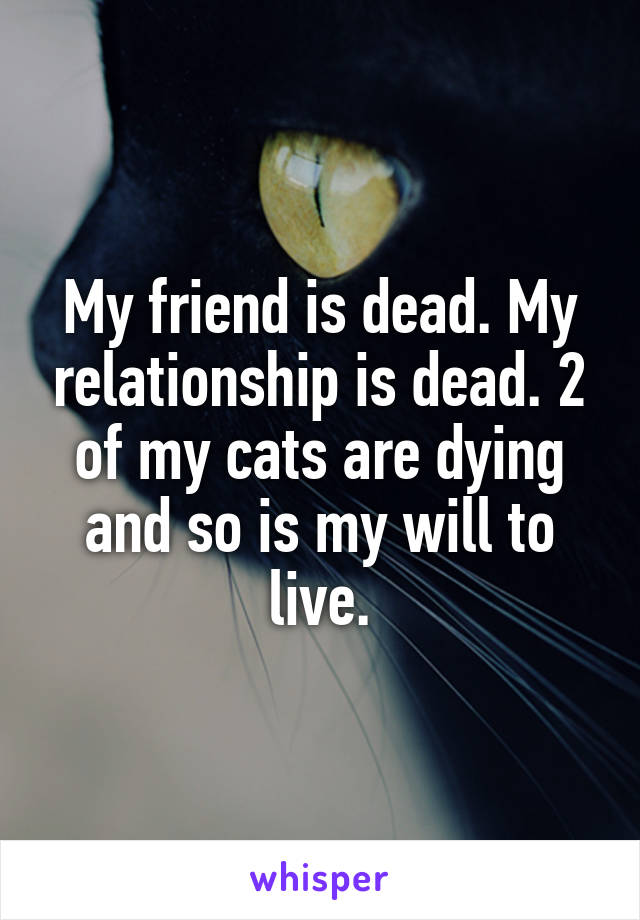 My friend is dead. My relationship is dead. 2 of my cats are dying and so is my will to live.