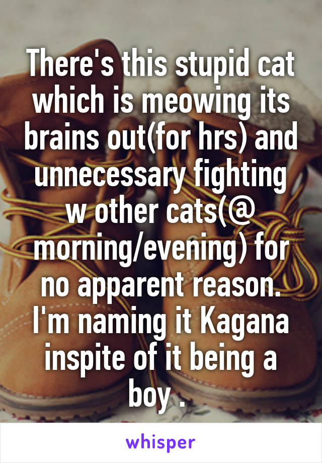 There's this stupid cat which is meowing its brains out(for hrs) and unnecessary fighting w other cats(@ morning/evening) for no apparent reason. I'm naming it Kagana inspite of it being a boy .