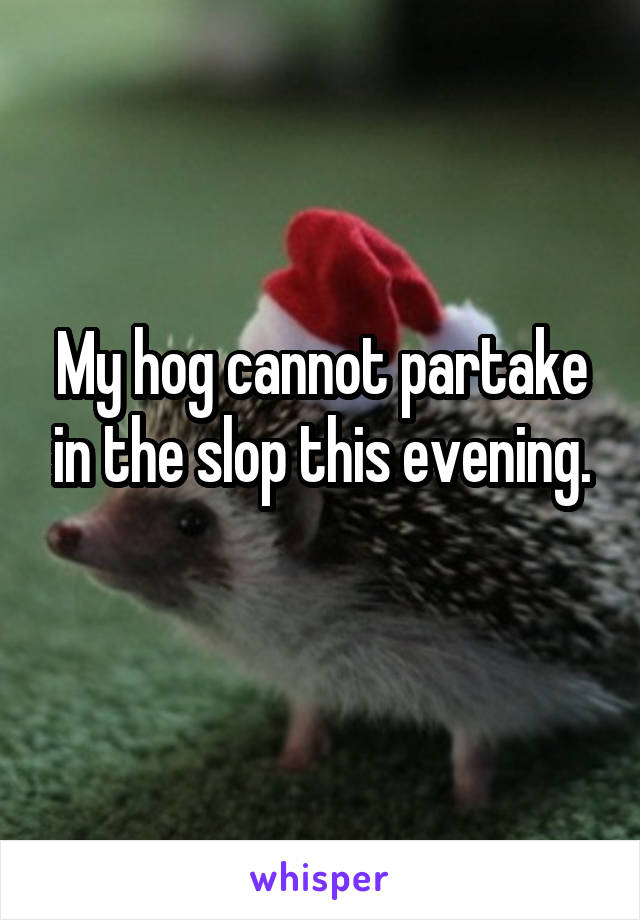 My hog cannot partake in the slop this evening.