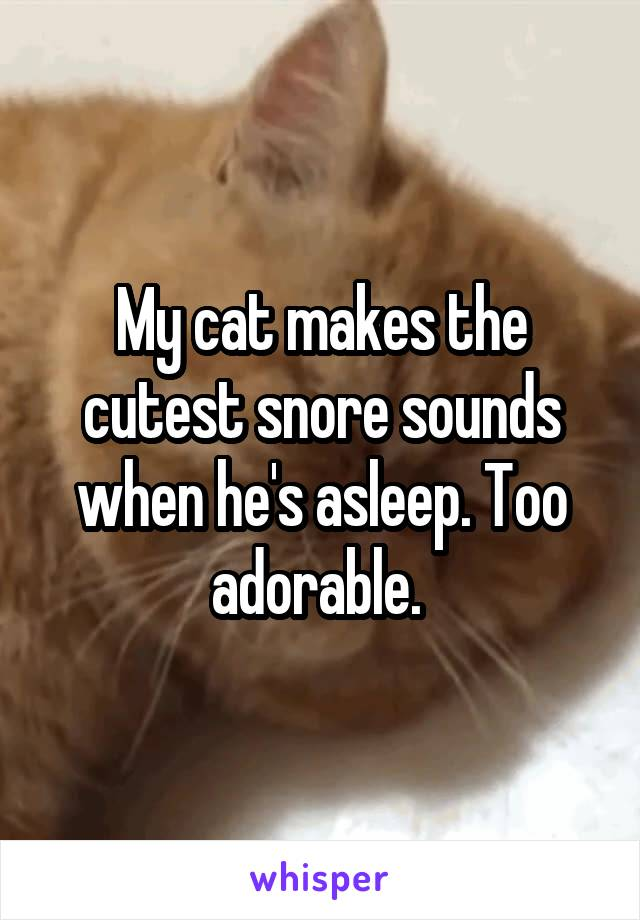 My cat makes the cutest snore sounds when he's asleep. Too adorable.