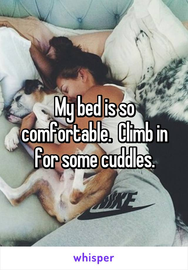 My bed is so comfortable.  Climb in for some cuddles.
