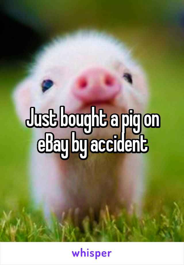 Just bought a pig on eBay by accident