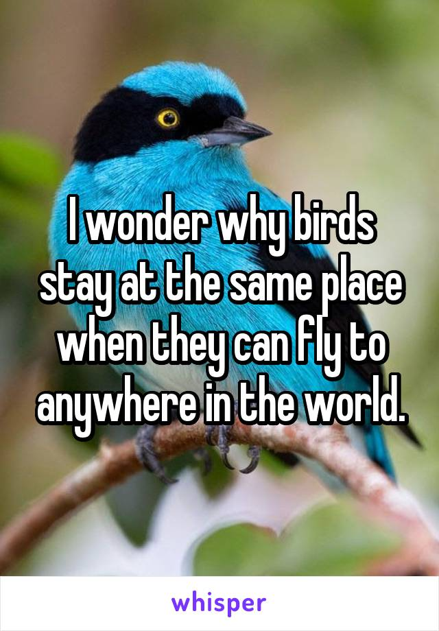 I wonder why birds stay at the same place when they can fly to anywhere in the world.