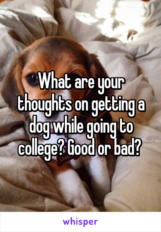 What are your thoughts on getting a dog while going to college? Good or bad?