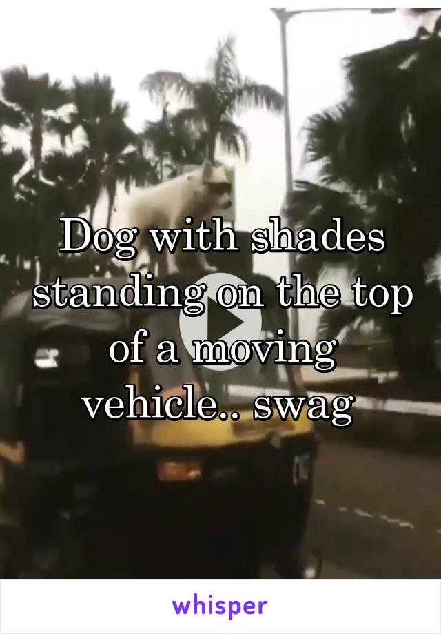 Dog with shades standing on the top of a moving vehicle.. swag