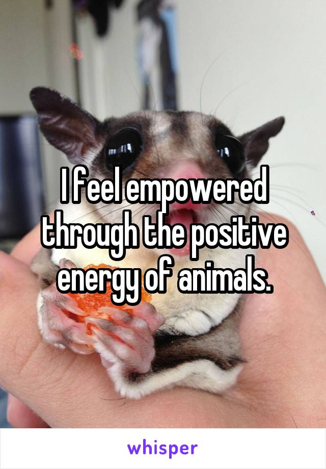 I feel empowered through the positive energy of animals.
