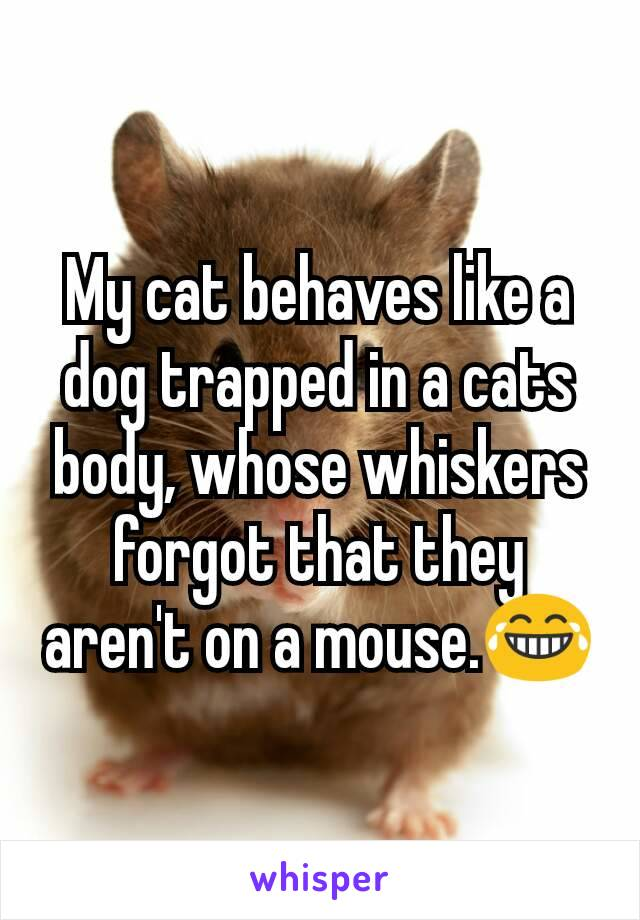 My cat behaves like a dog trapped in a cats body, whose whiskers forgot that they aren't on a mouse.😂