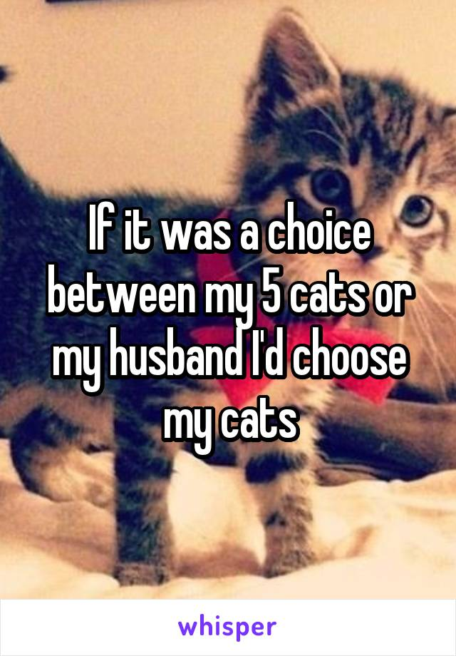 If it was a choice between my 5 cats or my husband I'd choose my cats