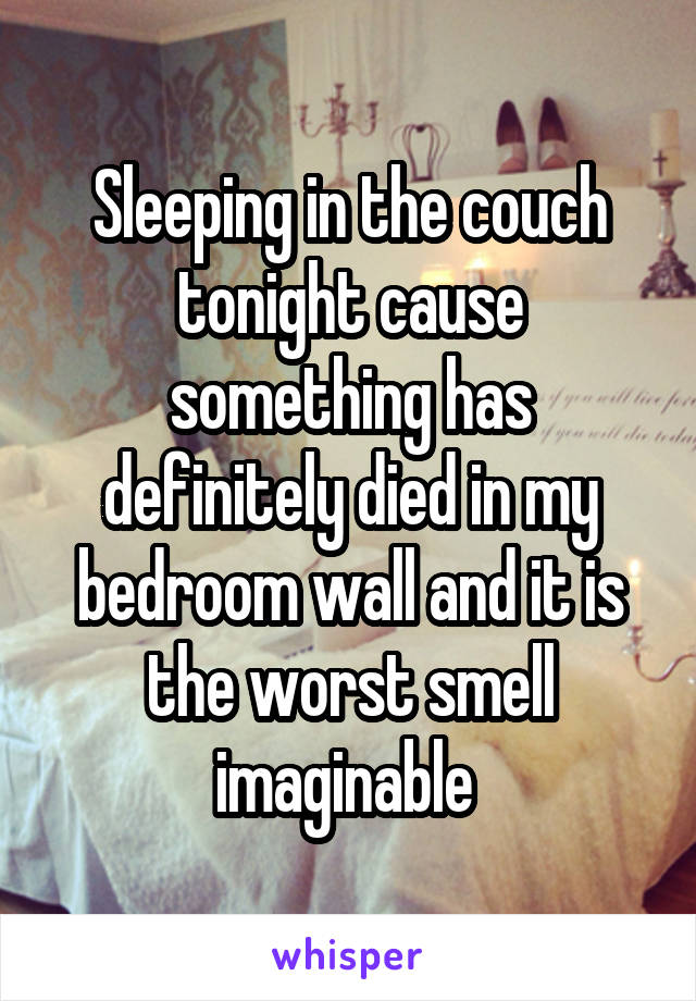 Sleeping in the couch tonight cause something has definitely died in my bedroom wall and it is the worst smell imaginable