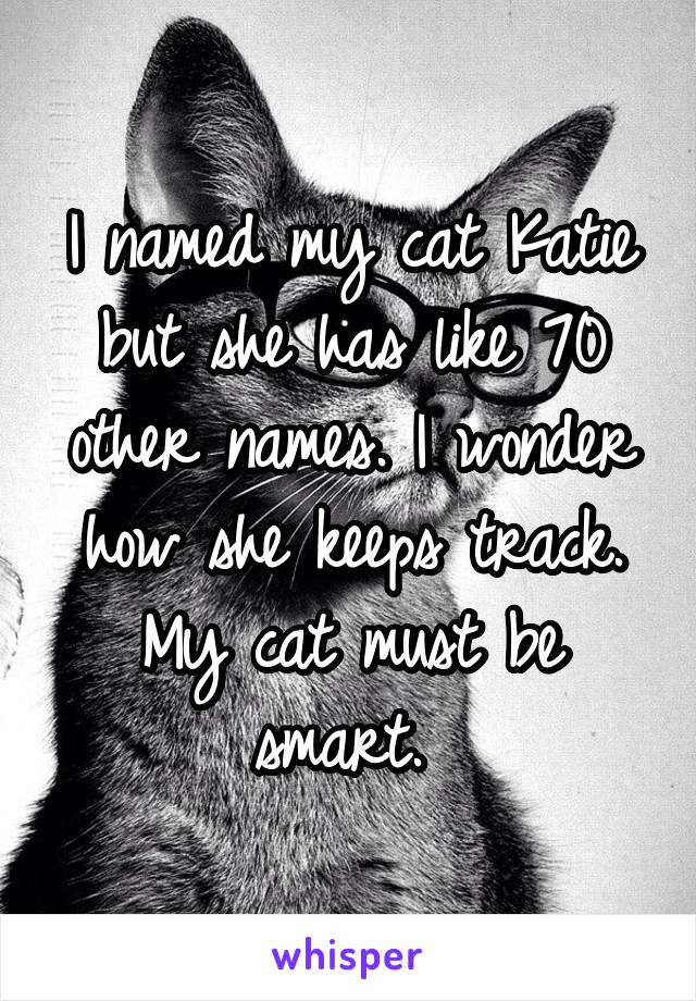 I named my cat Katie but she has like 70 other names. I wonder how she keeps track. My cat must be smart.