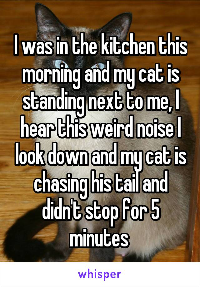 I was in the kitchen this morning and my cat is standing next to me, I hear this weird noise I look down and my cat is chasing his tail and didn't stop for 5 minutes