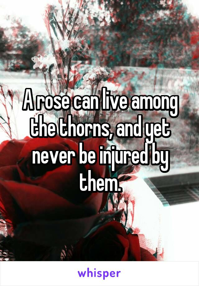 A rose can live among the thorns, and yet never be injured by them.