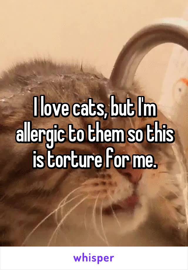 I love cats, but I'm allergic to them so this is torture for me.