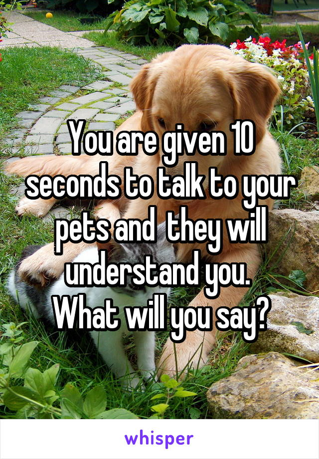 You are given 10 seconds to talk to your pets and  they will understand you.  What will you say?