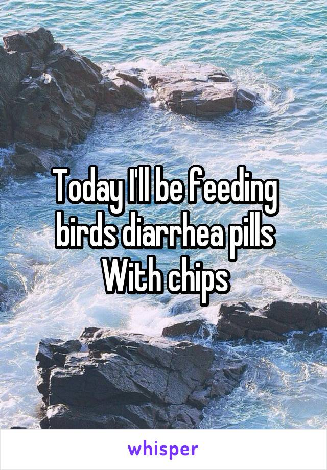 Today I'll be feeding birds diarrhea pills With chips