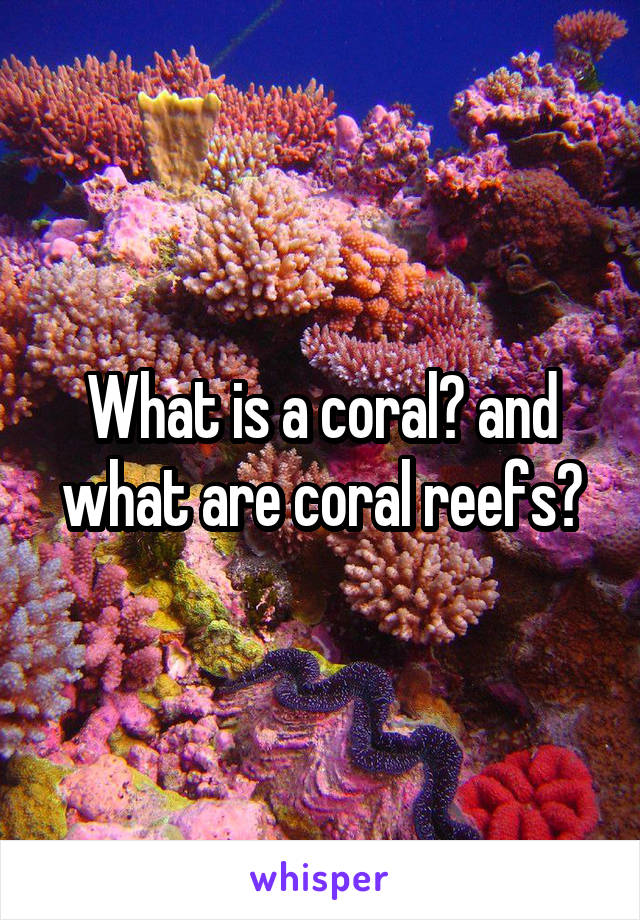 What is a coral? and what are coral reefs?