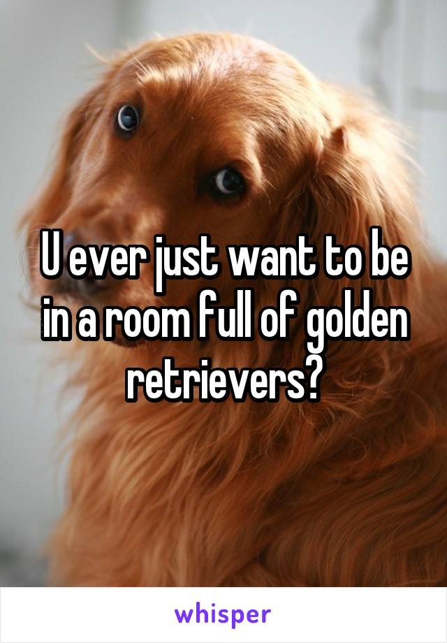U ever just want to be in a room full of golden retrievers?