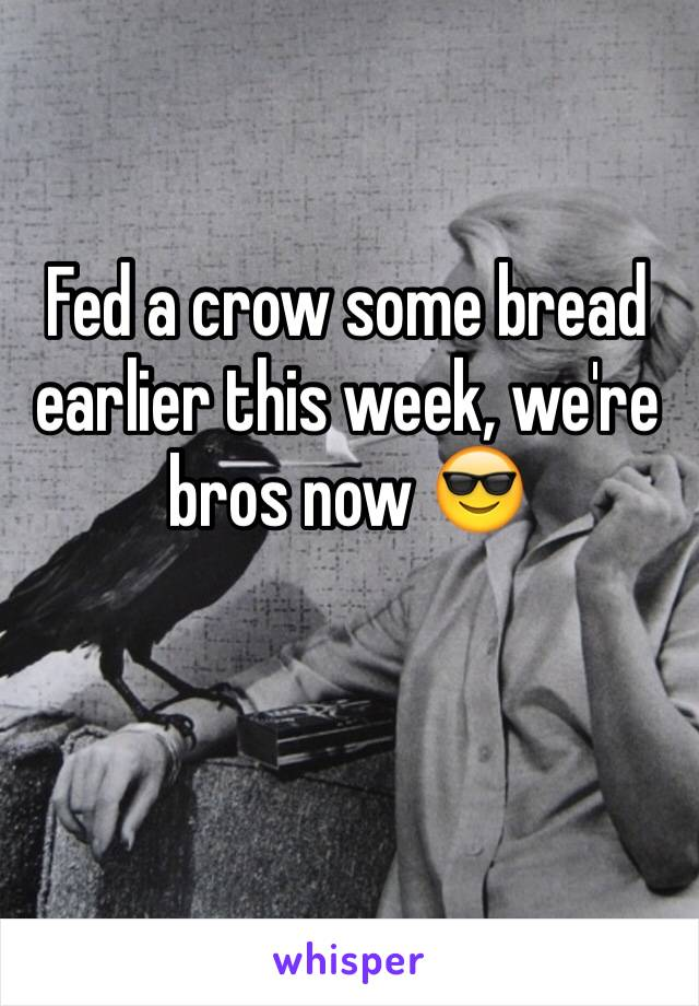Fed a crow some bread earlier this week, we're bros now 😎