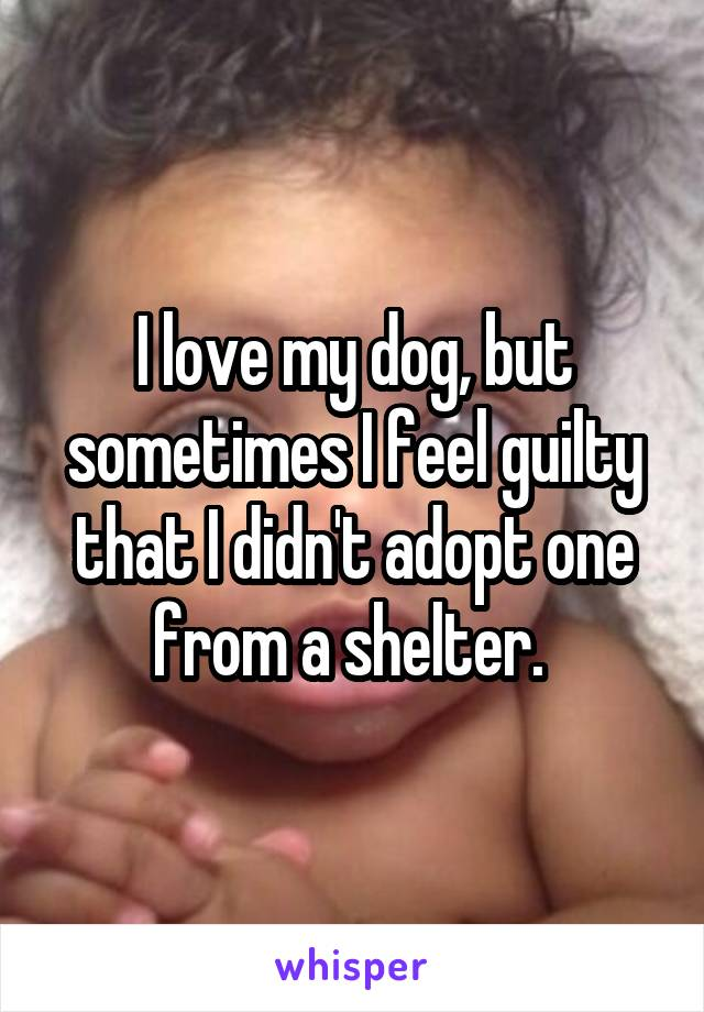 I love my dog, but sometimes I feel guilty that I didn't adopt one from a shelter.